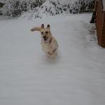 snow leaper