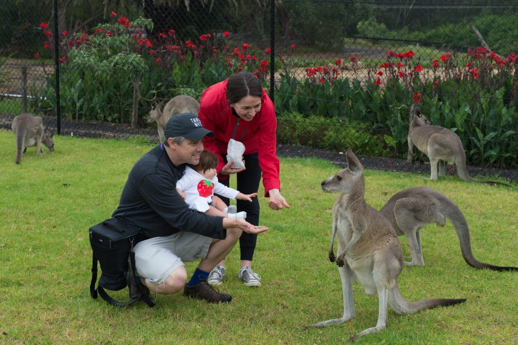 Petting Kangaroos!